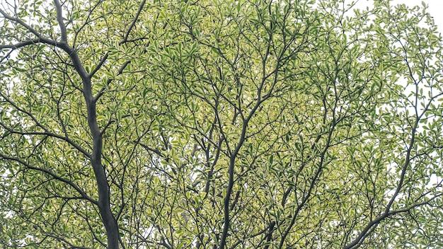 Зеленые листья растут на дереве Premium Фотографии