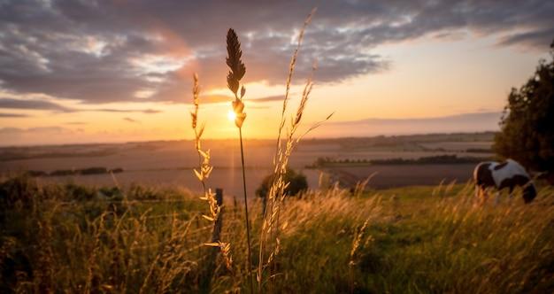 草木と差し出されたビューを放牧青黄色とオレンジ色の暖かい日光の下で田園風景に放牧馬 Premium写真