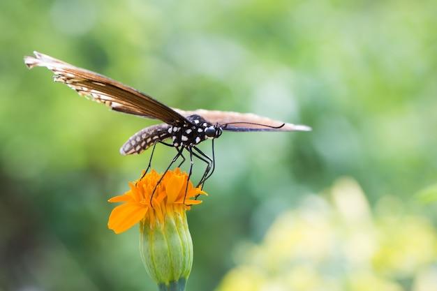 蝶は花の上に座っている Premium写真