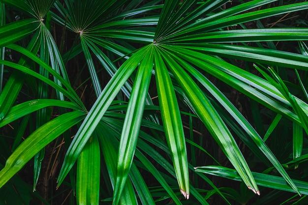 Пальмовый лист в лесу Premium Фотографии