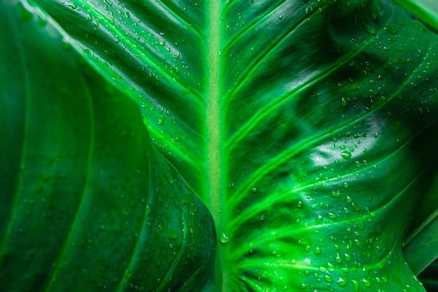 Капли дождя на фоне зеленых листьев Premium Фотографии