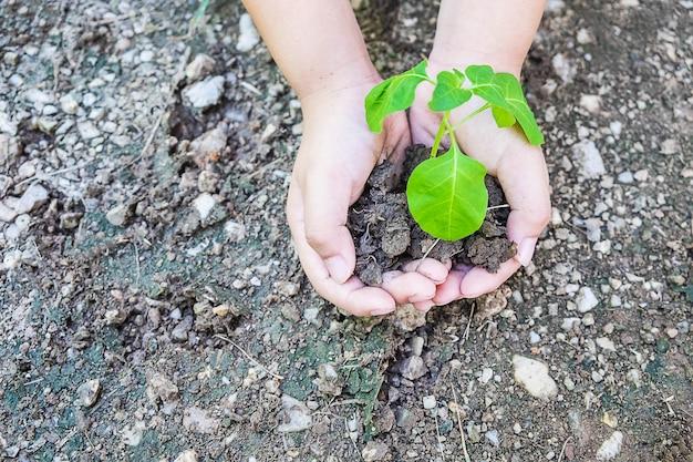 Деревья в руках, идея сажать деревья и любить природу Premium Фотографии