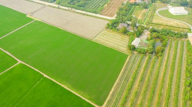 緑の農業地域の空中のトップビュー Premium写真