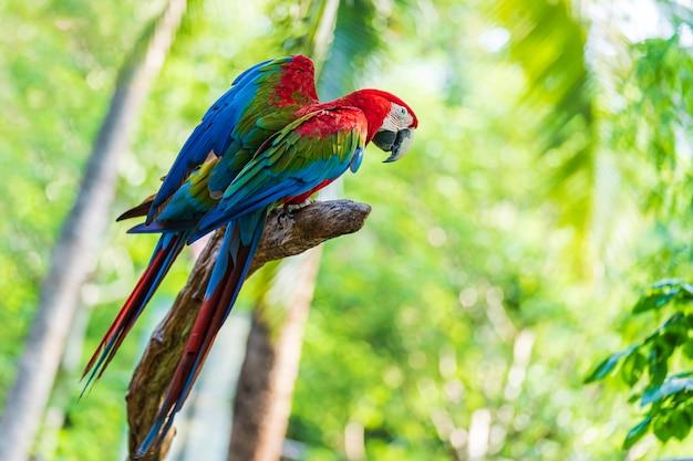 Группа красочные ара на ветвях деревьев Premium Фотографии