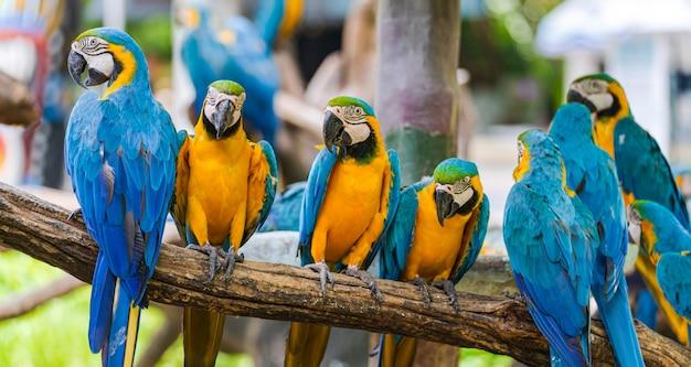 木の枝にカラフルなコンゴウインコのグループ Premium写真