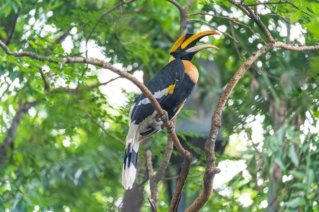 サイチョウ、木の上の鳥 Premium写真