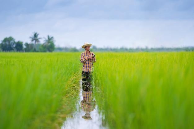 緑の田んぼでデジタルタブレットを使用してアジアの農家 Premium写真