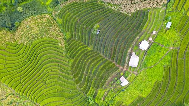 タイ北部の朝の緑の棚田の空撮風景の異なるパターン Premium写真