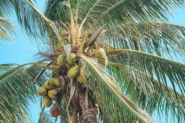 Кокосовая пальма с голубым небом и облаками на море. пастельный или минимальный тон. Premium Фотографии