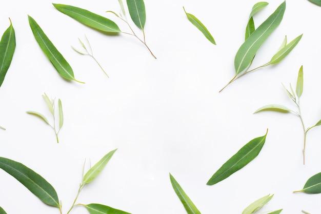 Рамка сделанная из листьев евкалипта на белой предпосылке. Premium Фотографии