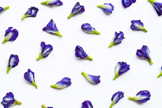 白の蝶のエンドウ豆の花 Premium写真