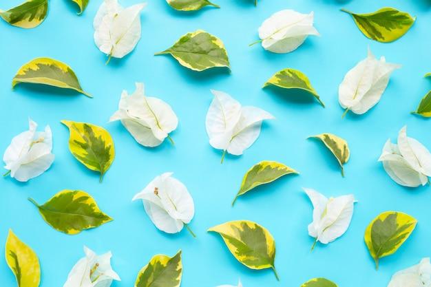 緑黄色の美しい白いブーゲンビリアの花は、シームレスなパターンを残します。 Premium写真