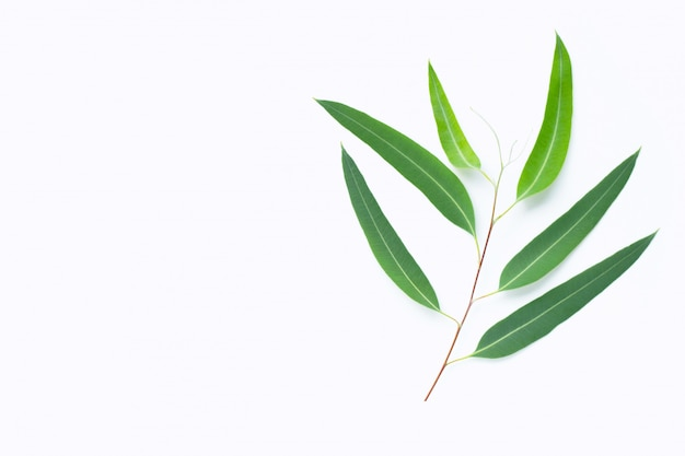Зеленая ветвь эвкалипта на белом фоне Premium Фотографии