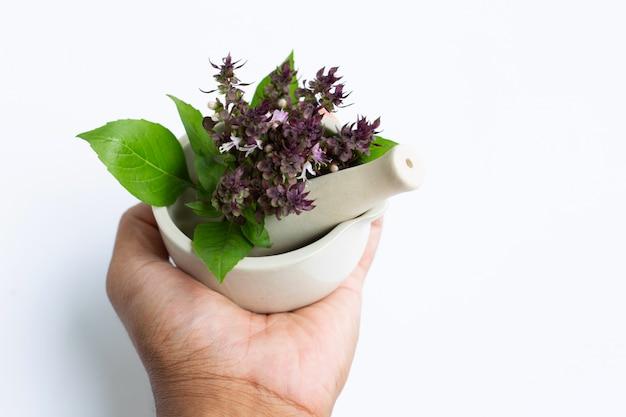 白い背景の磁器モルタルで紫色の花と甘いバジルを持っている手。 Premium写真