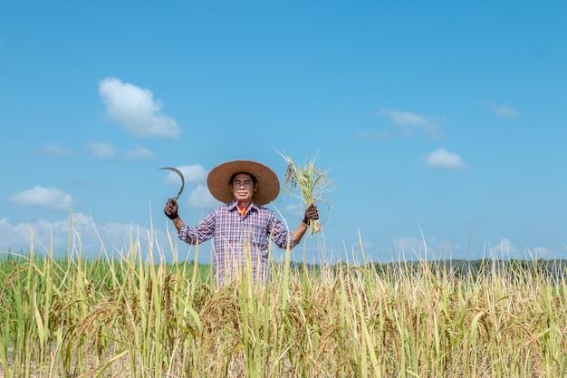 農家は水田で作物を収穫しています。明るい空の日 Premium写真