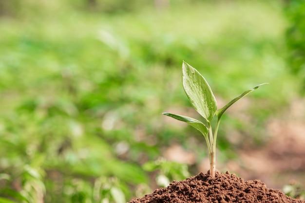 朝の光で自然に若い植物 Premium写真