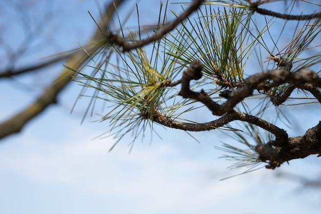 緑の葉と茶色の枝は青い空の景色です。 Premium写真