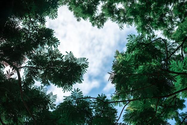 緑の葉のフォトフレームは自然によって作られています Premium写真