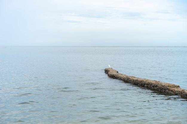 海の水は澄んでいてきれいです。海岸に打ち寄せる表面の波。ビーチでもっと岩。鳥は石の上に立っています。 Premium写真