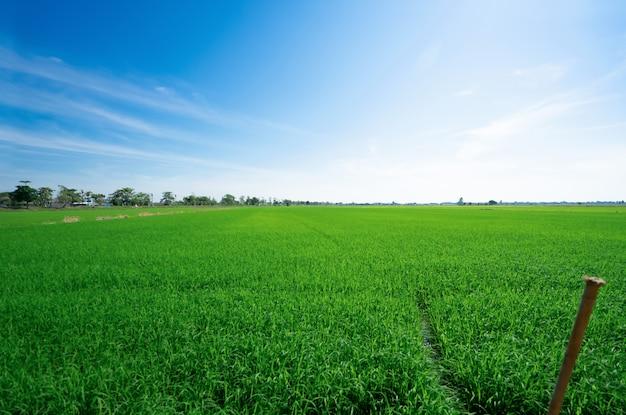 青い空と田んぼ。美しい自然 Premium写真
