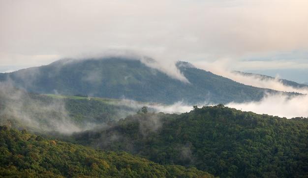 森と山の霧 Premium写真