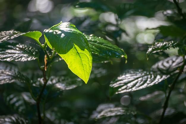 Лесные и зеленые деревья в таиланде Premium Фотографии