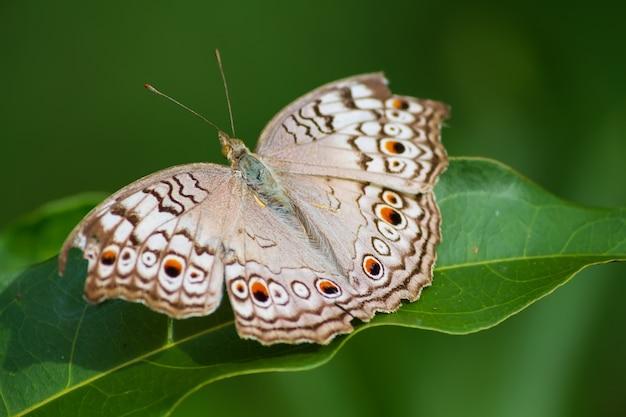 Бабочки живут на зеленых листьях. Premium Фотографии