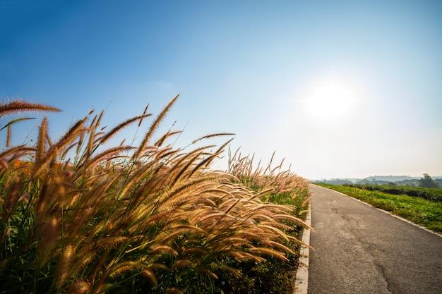 Цветущая трава утром, теплый солнечный свет. Premium Фотографии