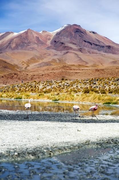 ボリビアのラグーナカラーダ Premium写真