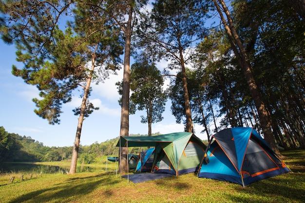 芝生のテント。 Premium写真