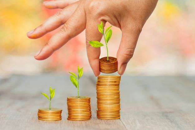 背景のボケ味を手に積み重ねたコインで小さな植物を育てます。 Premium写真