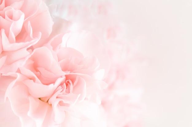 ピンクのカーネーションの花の花束。 Premium写真