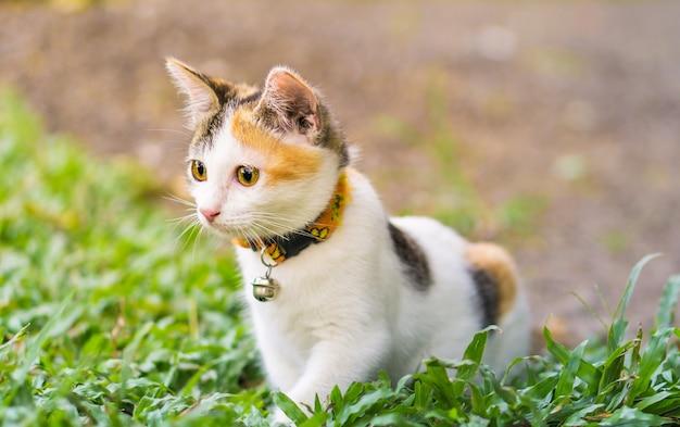 猫の猫 Premium写真