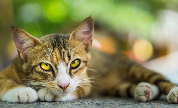猫探し。 Premium写真
