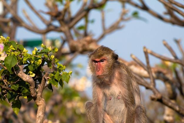 都会で猿だけ Premium写真