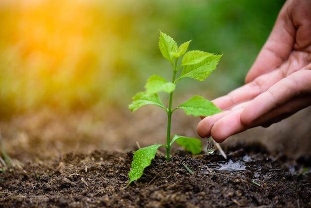 植えるために若い木に水を与える手。地球の日のコンセプト。 Premium写真