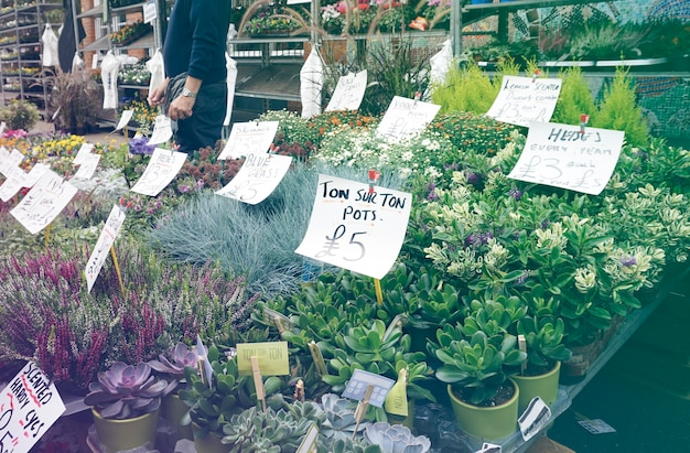 花屋は市場で満開 無料写真