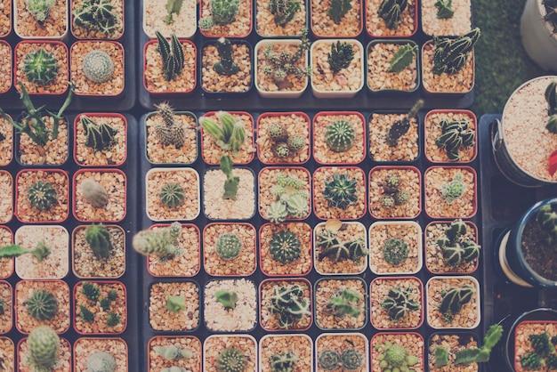 サボテンのハウスプラントコレクションデコレーションセット 無料写真