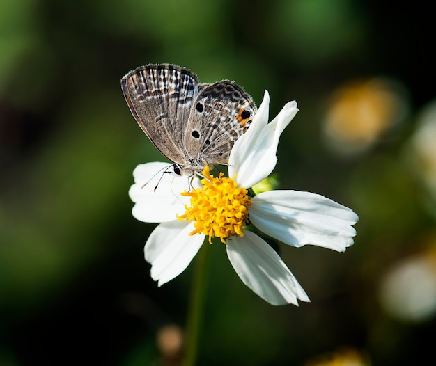 自然の中で蝶の拡大 無料写真