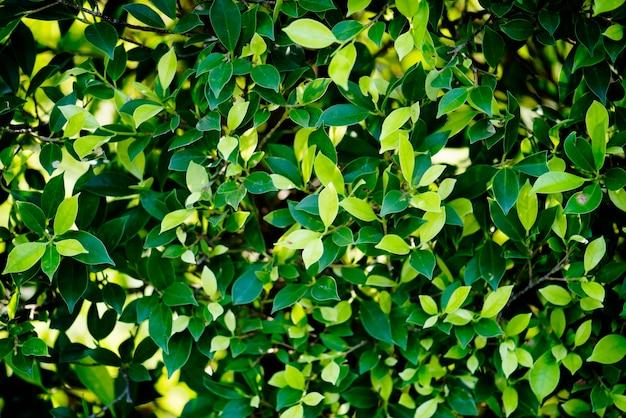 自然の中の緑の葉 無料写真