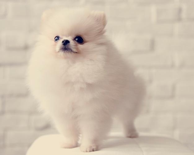 ペット犬の繁殖動物の肖像画子犬哺乳動物 無料写真
