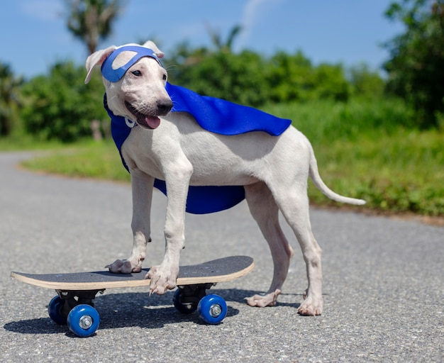 犬スケートボードストリート哺乳動物衣装犬 無料写真