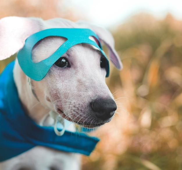 犬の友達かわいい犬の笑顔 無料写真