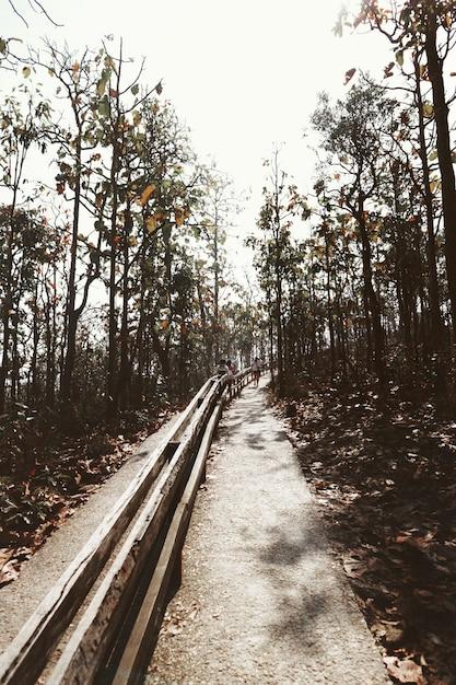 Путь сад дневной путь деревья холмистые районы Бесплатные Фотографии