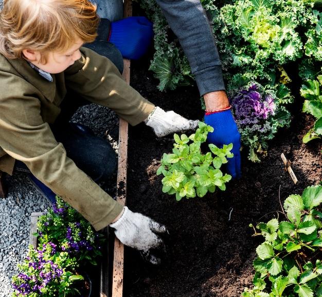 裏庭の庭から野菜を植える家族 Premium写真