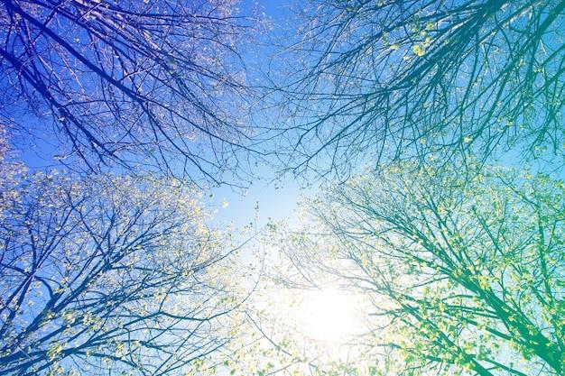 ワームズアイビュースカイツリーのショップアップ 無料写真