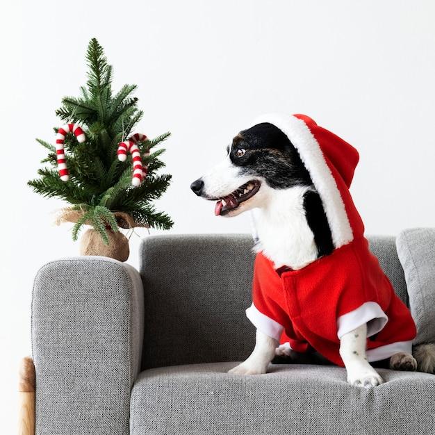 Кардиган вельш корги в костюме рождества Бесплатные Фотографии