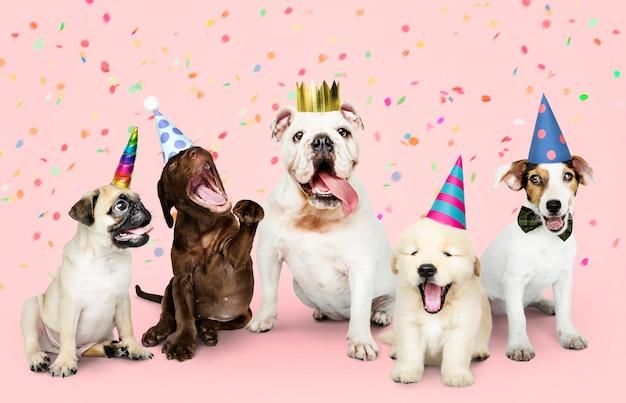 新しい年を祝う子犬のグループ 無料写真