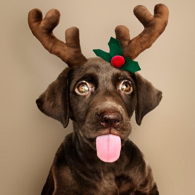クリスマストナカイヘッドバンドを着てかわいいラブラドールレトリーバー子犬の肖像 無料写真