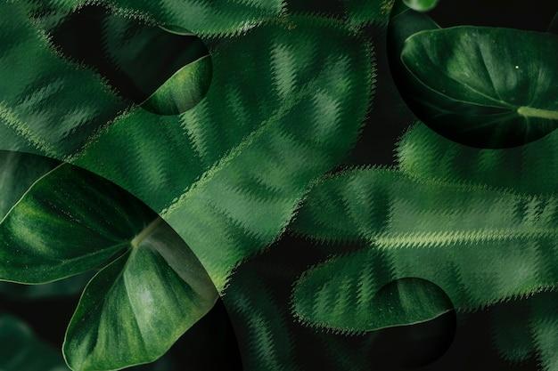 熱帯の葉の背景 無料写真